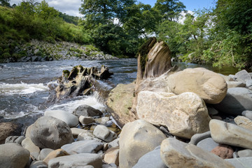 Tree trunk fell into the river Lune creating little waterfall in green landscape