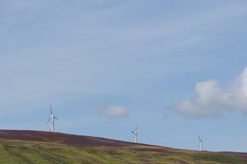 Three windmills in green and purple heather landscape and blue sky