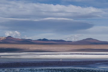 Wall Mural - Desert and mountain over blue sky and white clouds on Altiplano,Bolivia