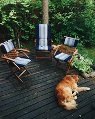 Three chairs stand outdoor and dog sleeps on wooden floor, breathes fresh air, waits for hosts. Pet sleeps outdoor, has pleasant dreams after delicious supper