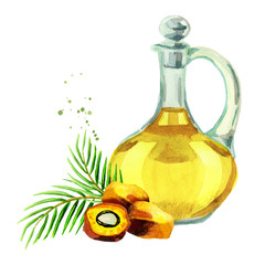 Palm oil. Hand drawn watercolor illustration