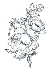 Hand drawn line art ink and watercolor peonies in graphic style. Feminine tattoo sketch, spring floral blooming, black and white illustration.