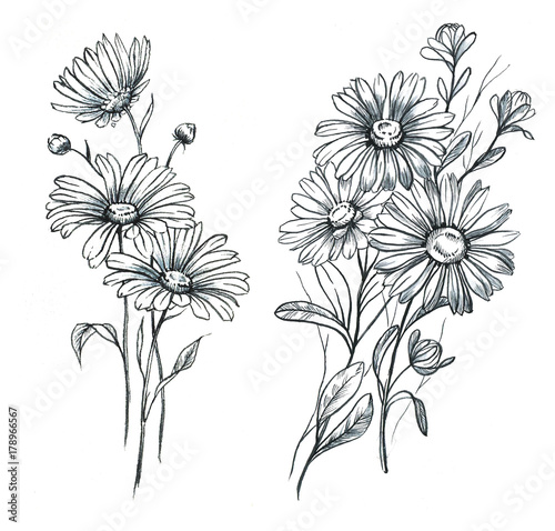 Hand Drawn Line Art And Watercolor Chamomile Flowers