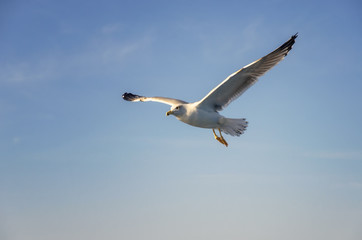 Flying seagulls over the sea