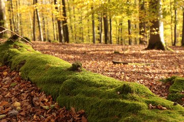 green mossy tree