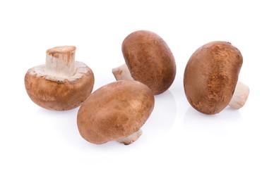 Mushroom champignon isolated on white background