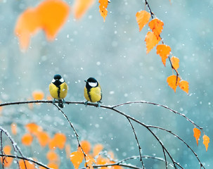 Printed roller blinds Bird couple of cute birds Tits in the Park sitting on a branch among bright autumn foliage during a snowfall
