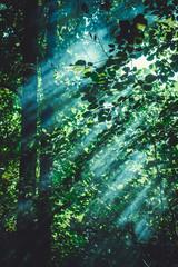 Sunlight passes through the leaves