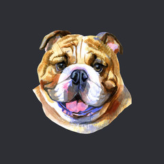 Colored English bulldog's head. Watercolor picture on black background