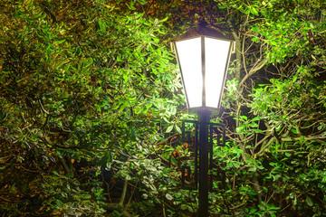 Luminous street light on the background of foliage of the magnolia tree at night