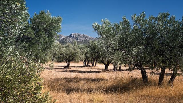 Wunderschöne Berglandschaft mit Olivenhain im Vordergrund