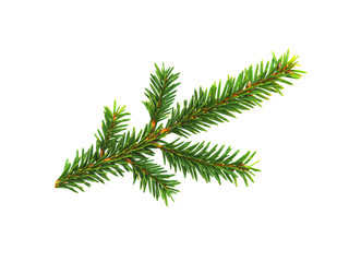 Green branch of spruce isolated on white background. Cut out evergreen fir tree, Christmas tree
