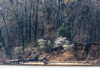 Spring at Mason Neck State Park