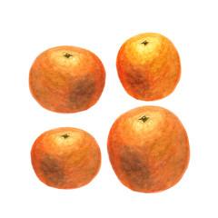 Botanical watercolor illustration sketch of orange on white background