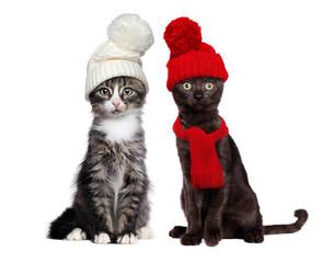 Two sitting little kittens wearing knitted hats