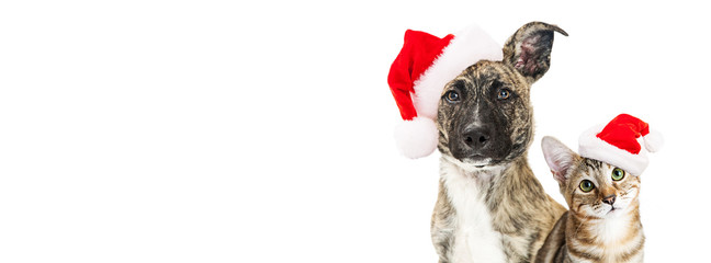 Christmas dog and cat website banner