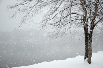 Falling snow piles up on the shore of a winter lake