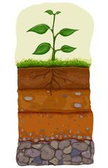 Soil Layer Illustration