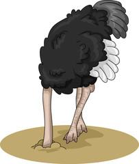 Ostrich Bury Head Sand