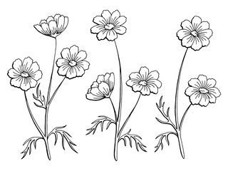 Cosmos flower graphic black white isolated sketch illustration vector