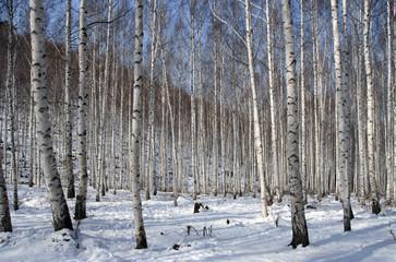 자작나무 숲의 겨울, 인재, 대한민국
