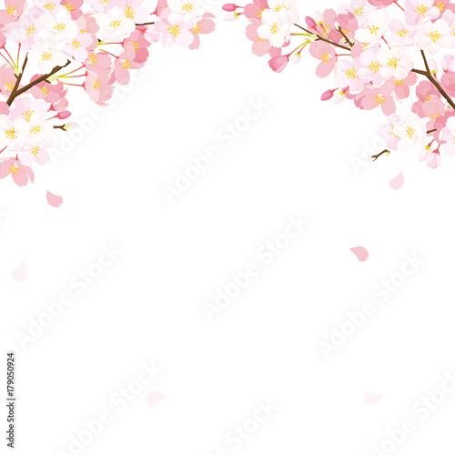 桜 背景イラストfotoliacom の ストック画像とロイヤリティフリーの