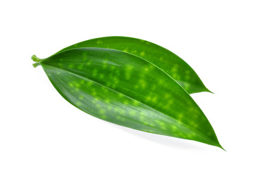 Wall Mural - close up of two green leaves isolated on white background