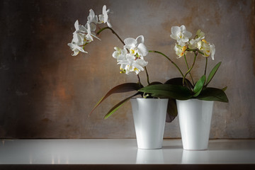 potted white orchids (Phalaenopsis) on a shiny sideboard in front of a rough vintage wall, decoration with contrast between old and modern, copy space