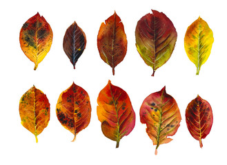 Autumn collection. Watercolor hand drawn illustration