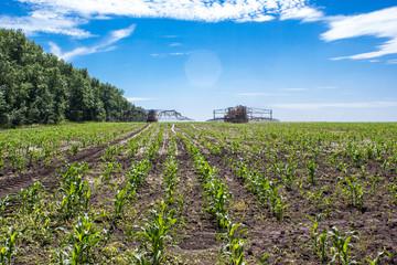 The agricultural machine operates in a corn field
