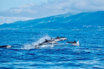 Spoed Foto op Canvas Dolfijn Wild dolphins in the Azores