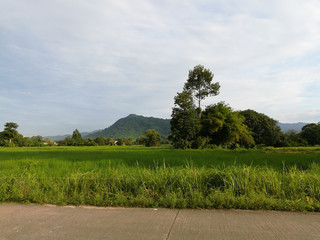 Mountain and green scenery