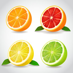 Fresh citrus fruit halves. Orange grapefruit lemon lime isolated vector realistic icons