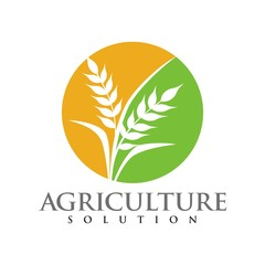 Wheat logo for agriculture industries design template vector