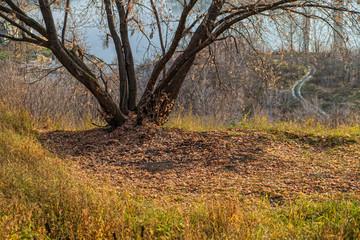 tree on a background of autumn foliage