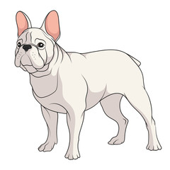 Color illustration of a French Bulldog. Isolated vector object on white background.