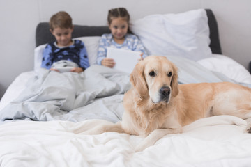 Dog lying on bed with kids