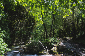 Mountain river in the Caucasus around the trees near the trail