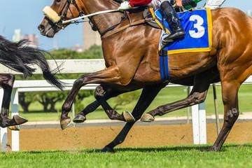 Horse Racing Body Legs Heads