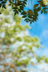 Fresh leaves on sky