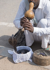 Snake charmer playing gourd flute to hypnotize a cobra