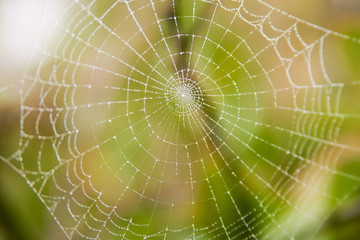 close-up of spider web with drops of dew on it