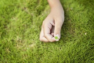 clover in hand