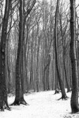 Path through wintery forest in black and white
