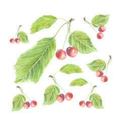 Botanical watercolor illustration of red cherries with green leaves isolated on white background. Could be used as decoration for web design, cosmetics design, package, textile
