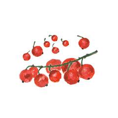 Botanical watercolor illustration sketch of apple on white background