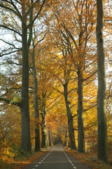 Empty road in autumn coloured by trees and leaves