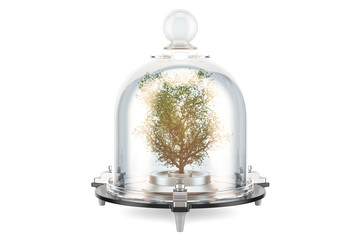Green tree covered by glass bell. Conservation and protection concept, 3D rendering