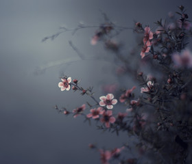 Small pink blooms on branches against a grey background
