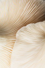 Close up view of mushroom texture